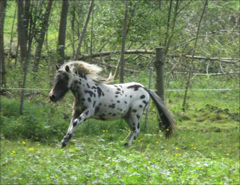 tl_files/bilder/Hengste/IMG_9105-3.JPG