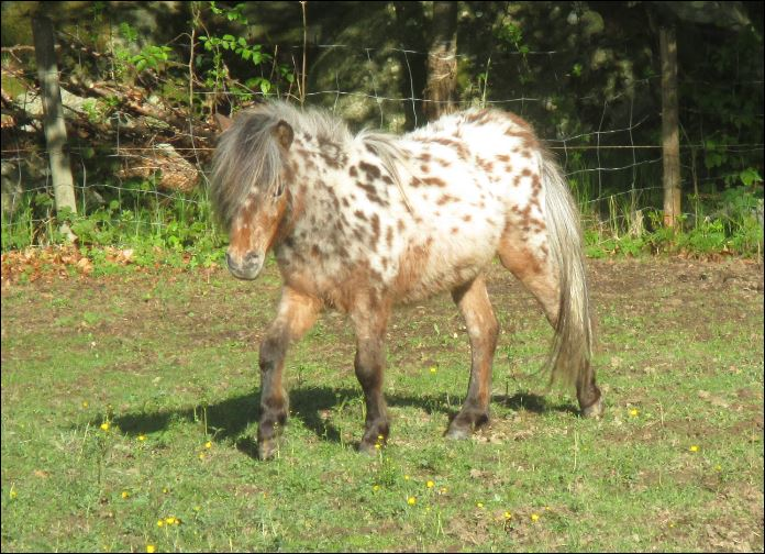 tl_files/bilder/Youngsters/IMG_5054.JPG