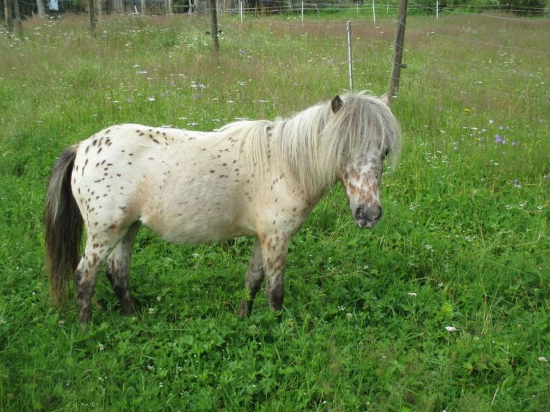 tl_files/bilder/Youngsters/IMG_8021.JPG